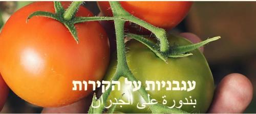 אתגר ``עגבניות על הקירות``